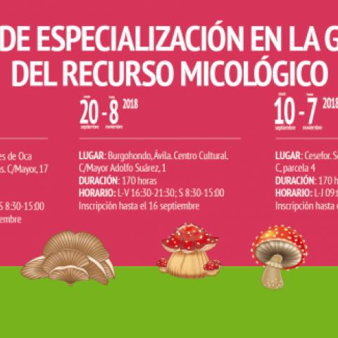 Cesefor impartirá en Soria, Burgos y Ávila sendos cursos de especialización en el recurso micológico